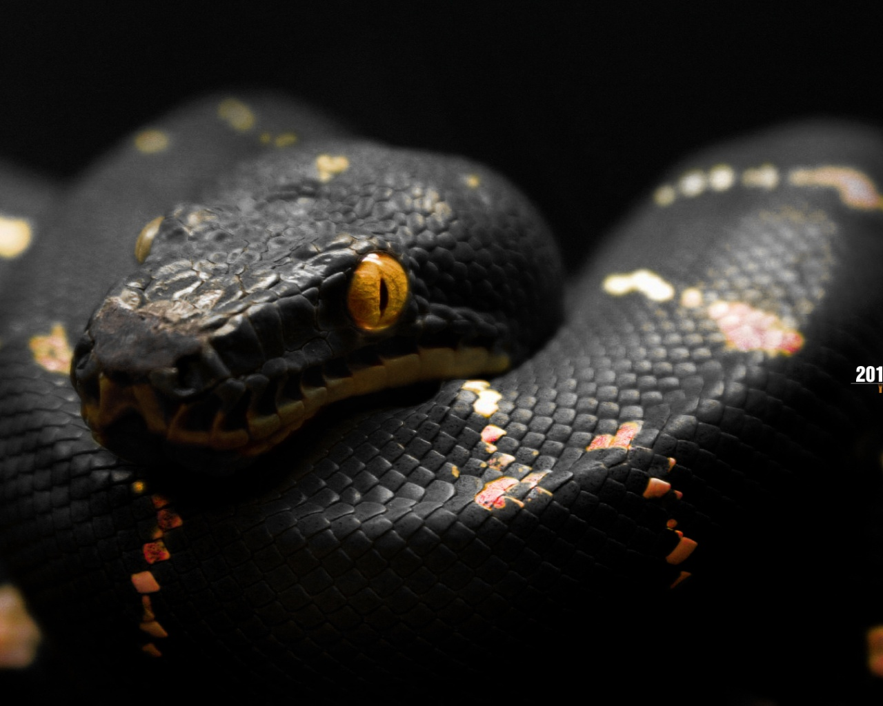 Cool Snake Pic Black