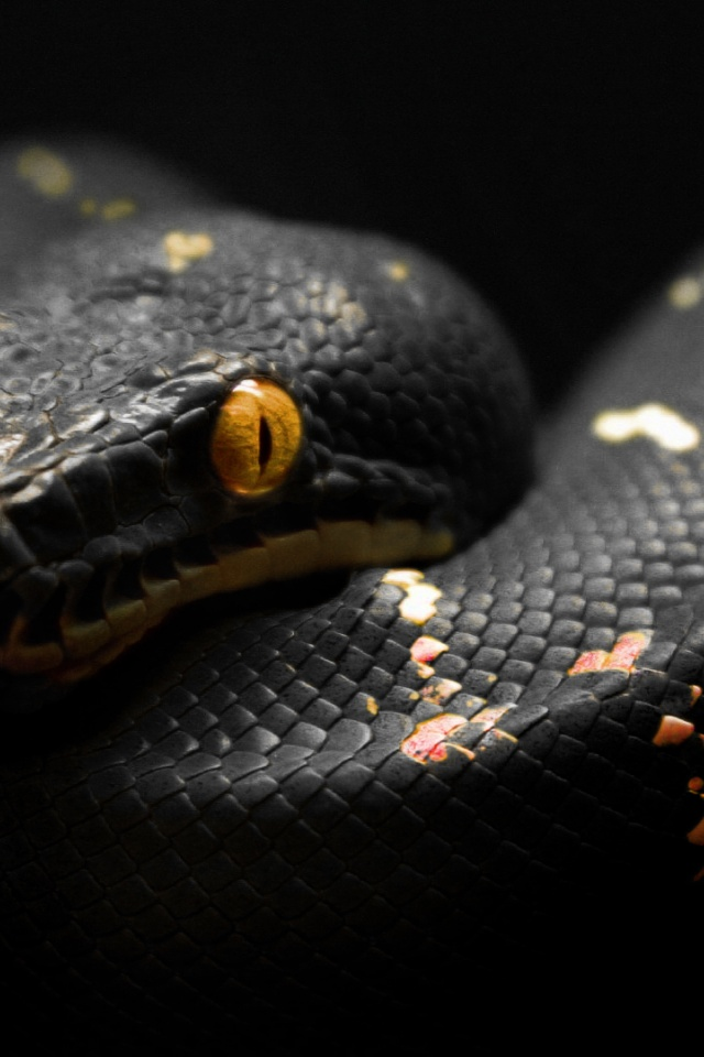 640x960 2013 Year Of The Black Snake Iphone 4 Wallpaper
