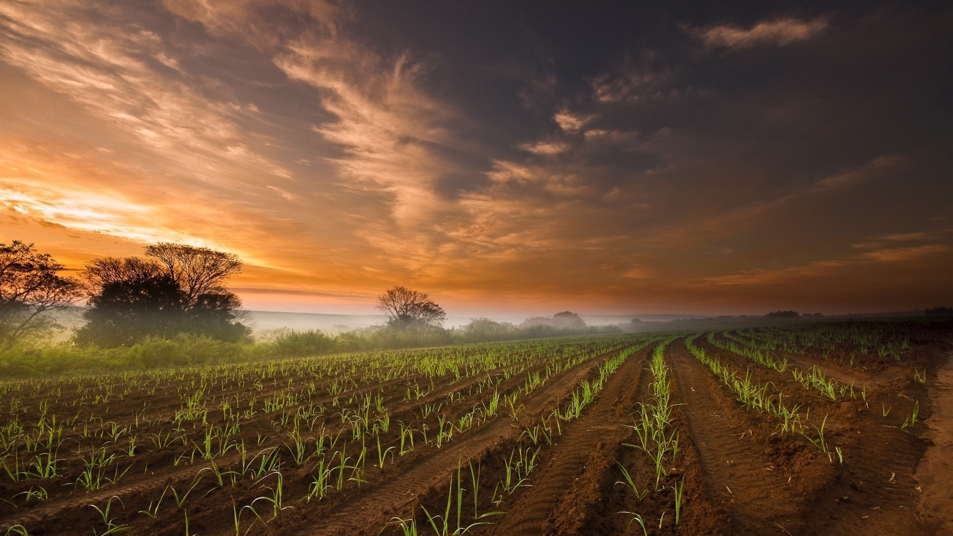 1920x1080 Agriculture Field Amp Red Sky Desktop Pc And Mac