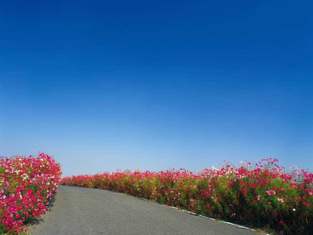 920x520 alley flowers google cover photo