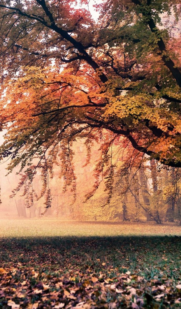 600x1024 amazing autumn tree grass park galaxy tab 2 wallpaper for Amazing wallpaper for tab