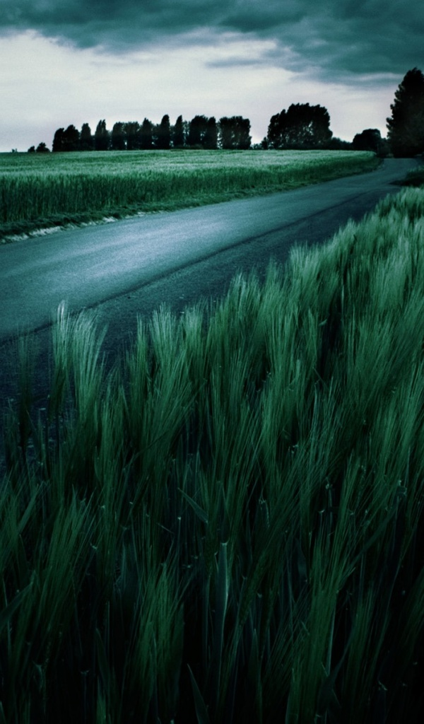600x1024 amazing dark green wheat field galaxy tab 2 wallpaper for Amazing wallpaper for tab