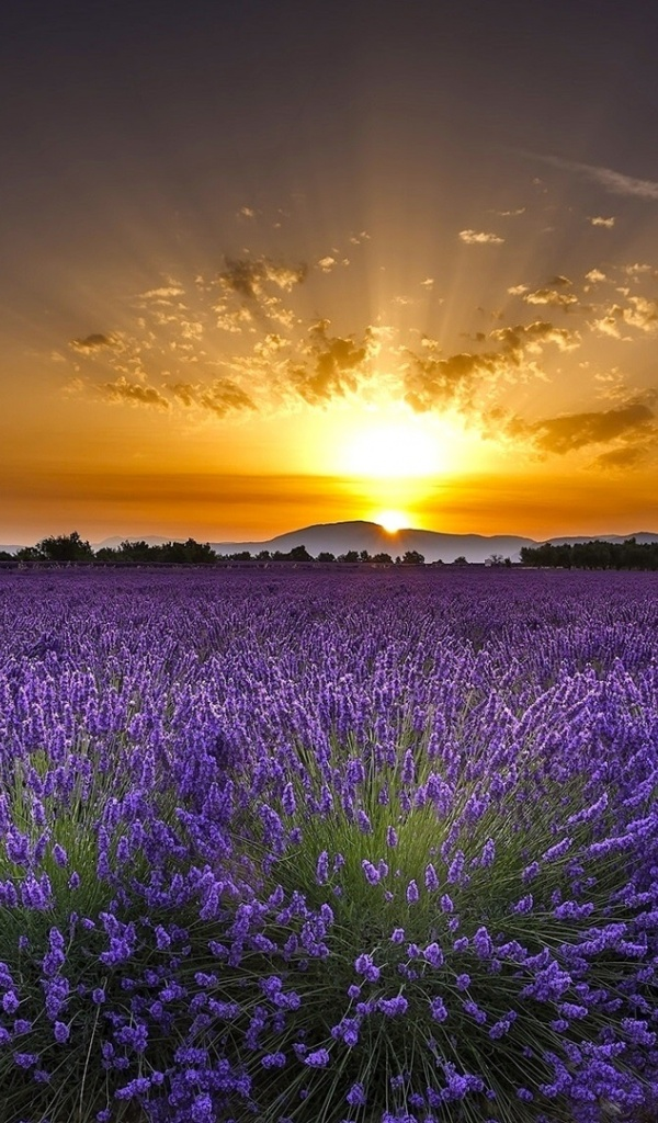 600x1024 amazing lavender field sunrise galaxy tab 2 wallpaper for Amazing wallpaper for tab