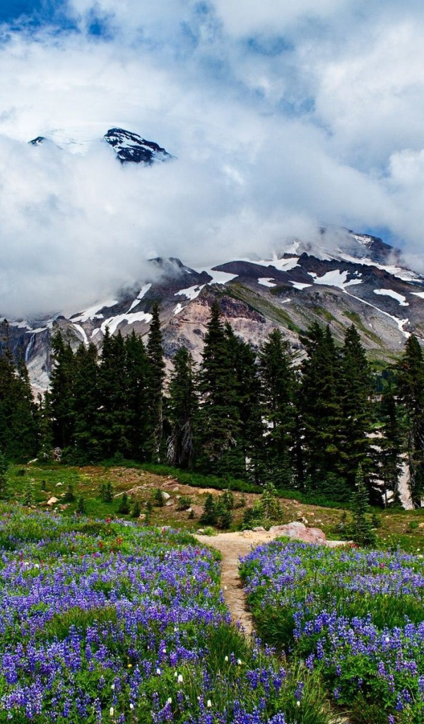 600x1024 Amazing Washington Scenery