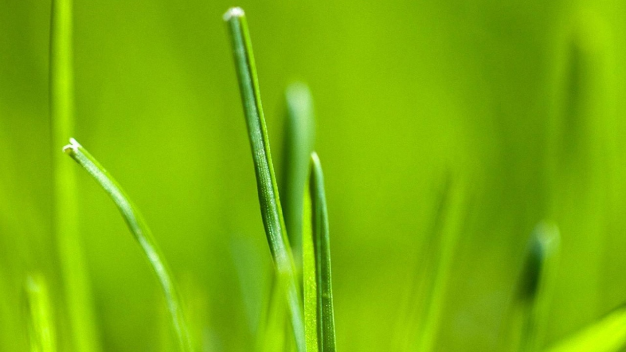 1280x720 Android 3.0 Grass Wallpaper Desktop PC And Mac