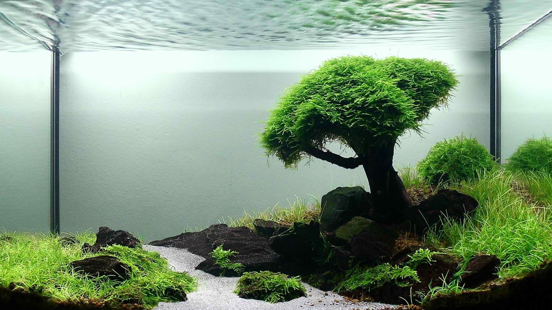 1920x1080 Aquarium Tree Stones & Grass desktop PC and Mac wallpaper