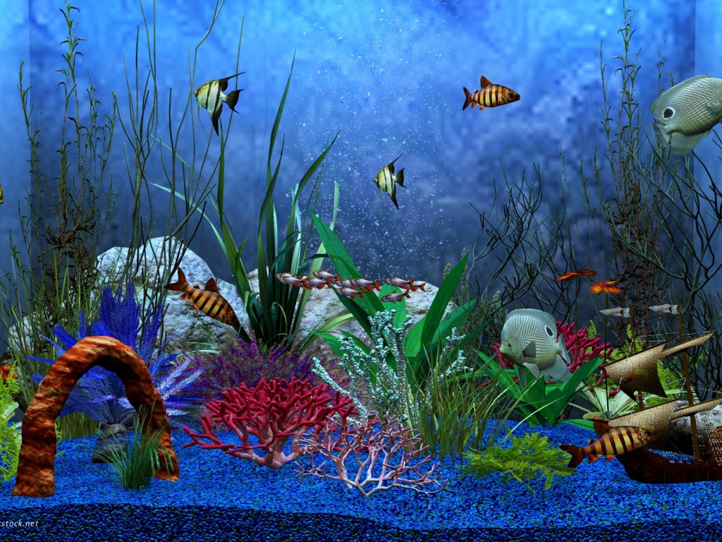 photos 1024x768 aquarium - photo #2