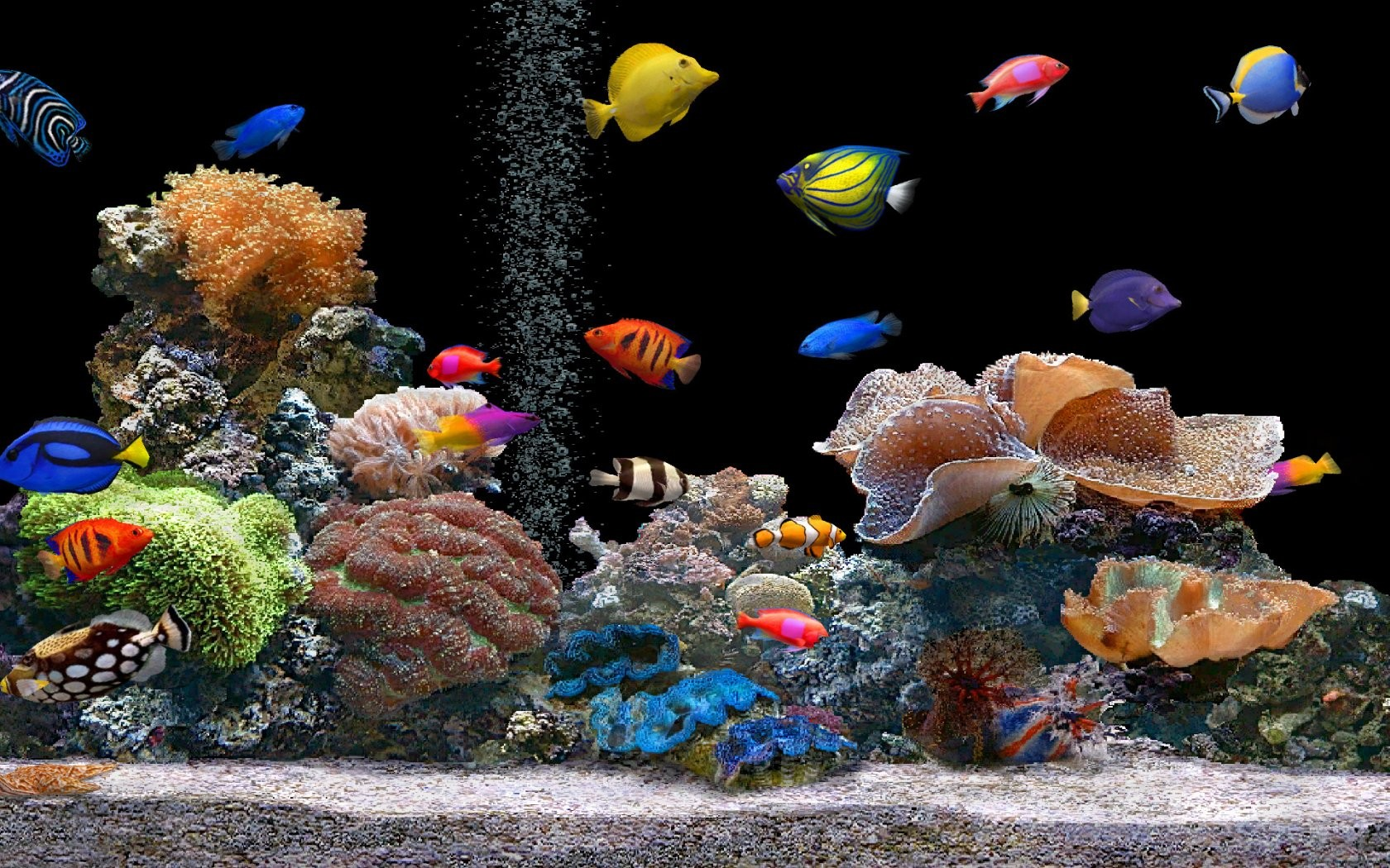 1680x1050 Aquarium desktop PC and Mac wallpaper