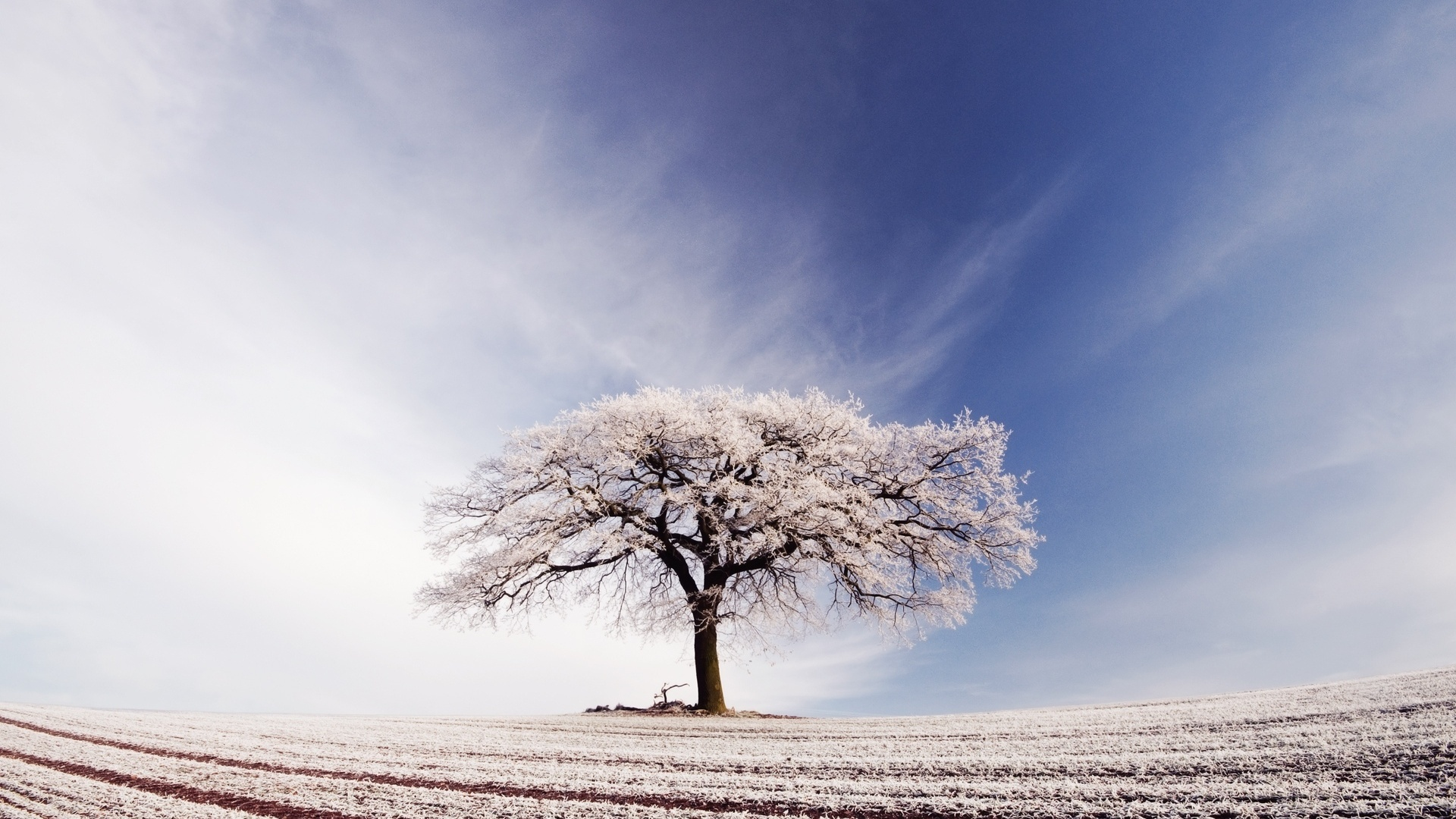 1920x1080 Arable Tree Snow Sky