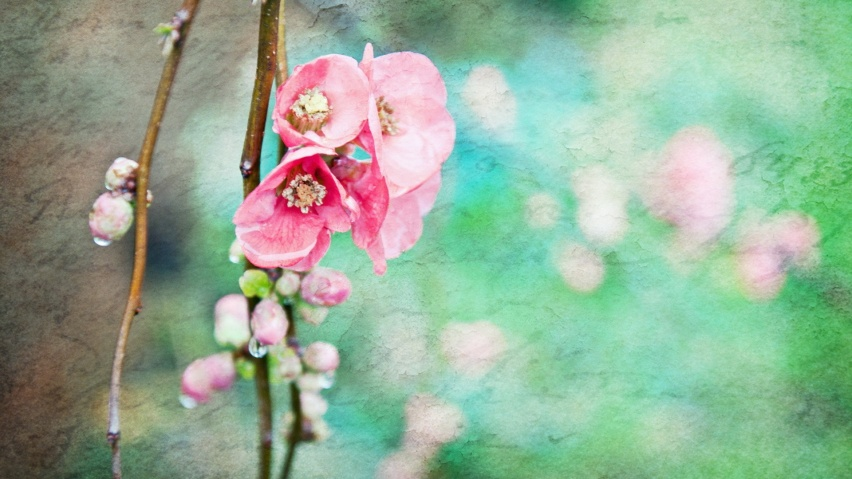 825x315 Artistic Spring Flowers Facebook Cover Photo