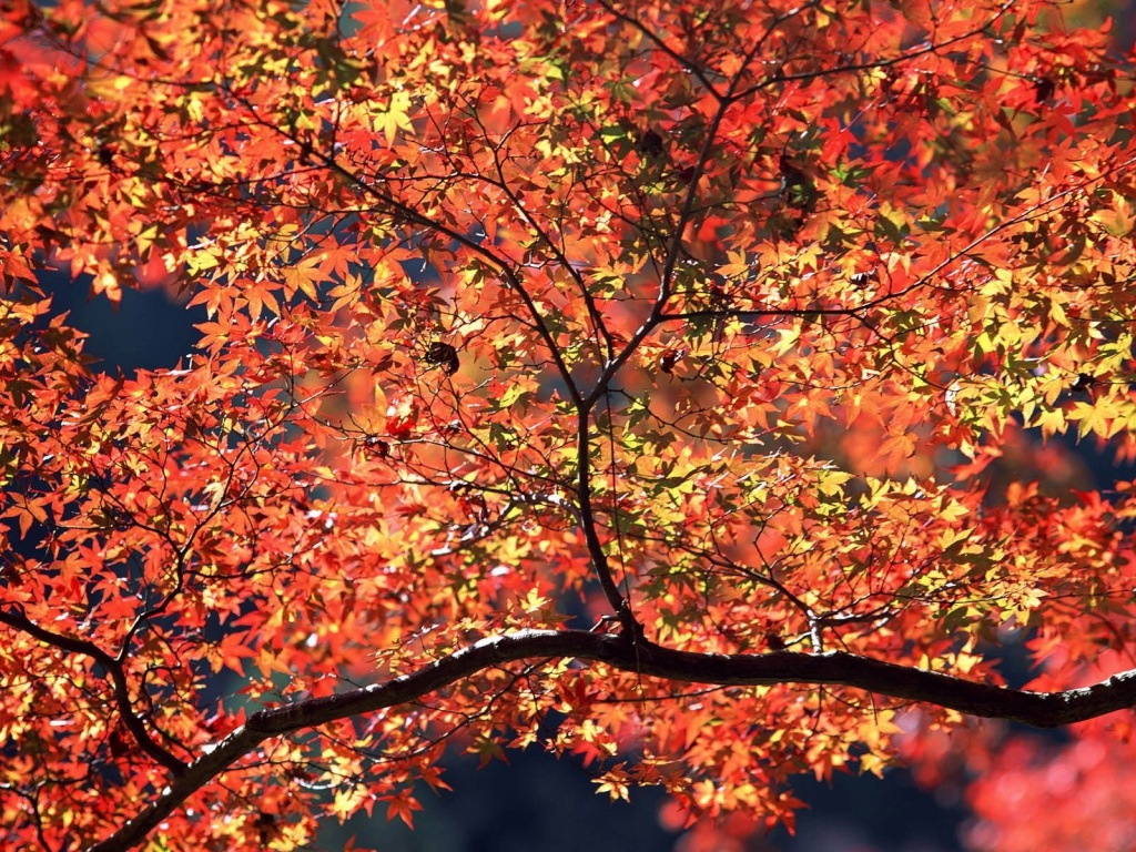 920x520 Autumn Colors