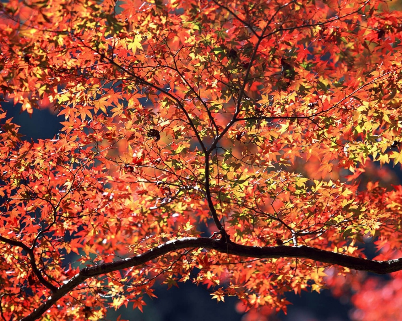 1280x1024 Autumn Colors