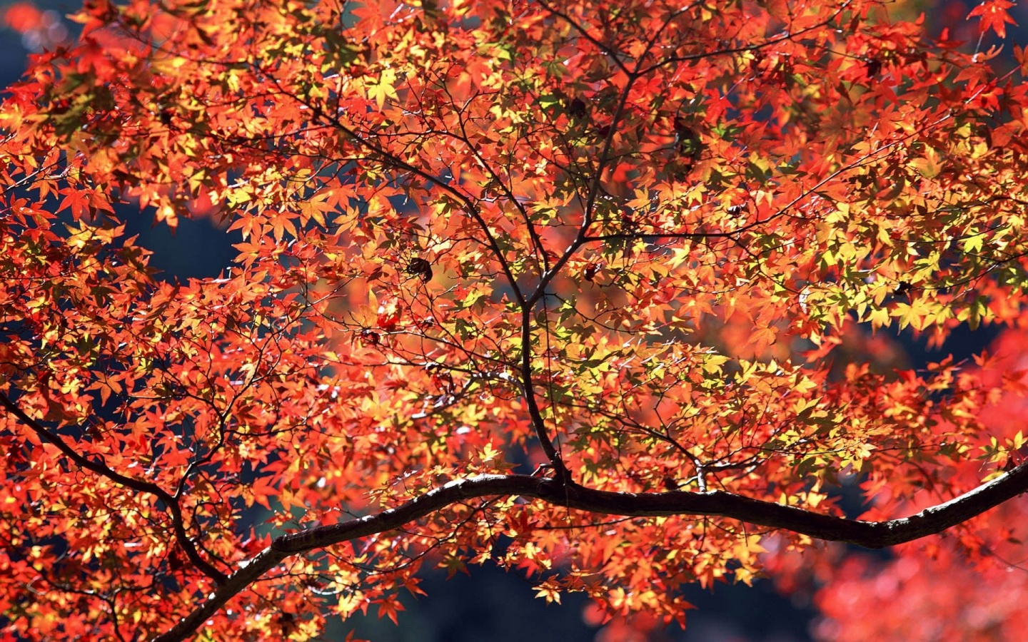 1440x900 Autumn Colors