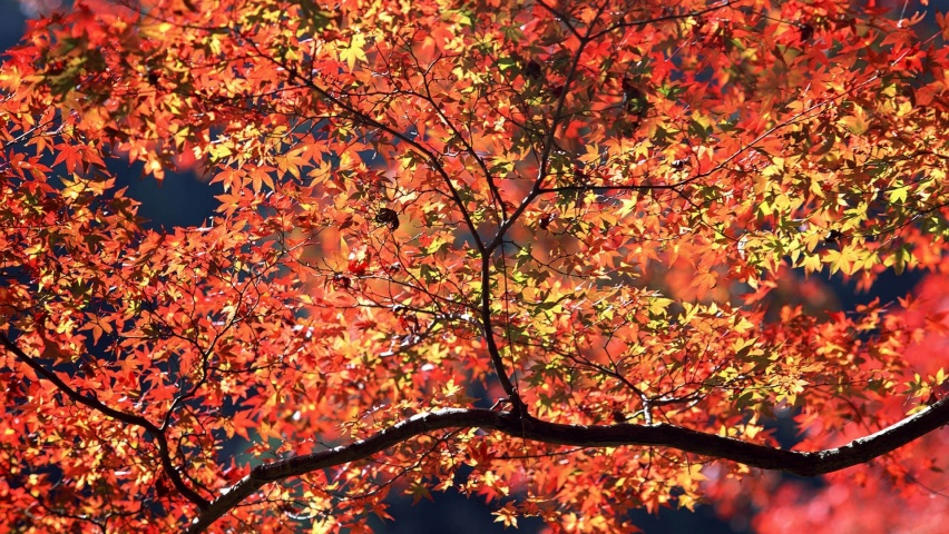 852x480 Autumn Colors