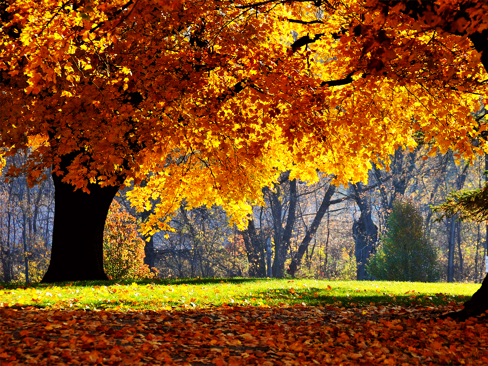 1600x1200 autumn falls desktop pc and mac wallpaper - Desktop wallpaper 1600x1200 ...