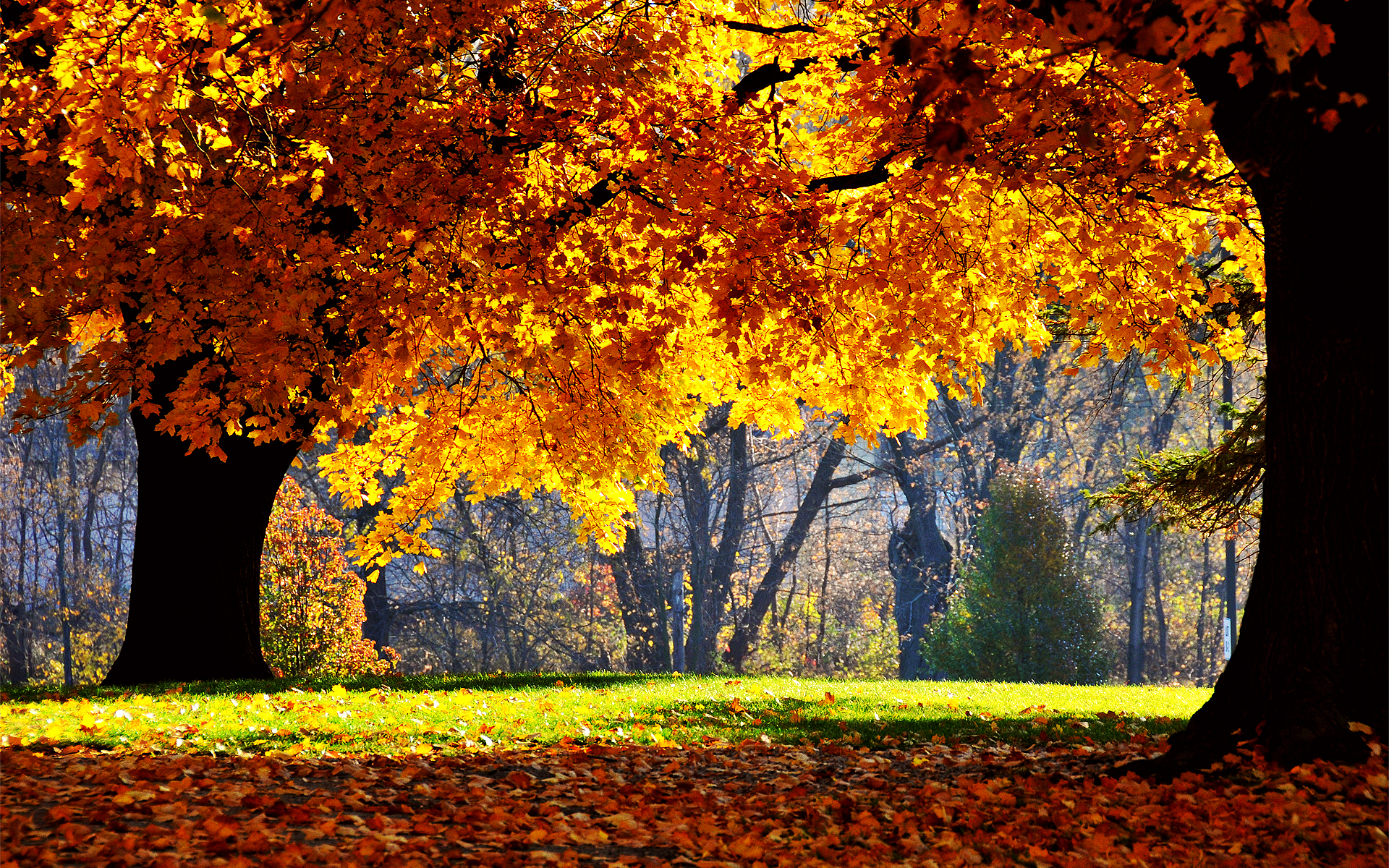 fall desktop wallpaper