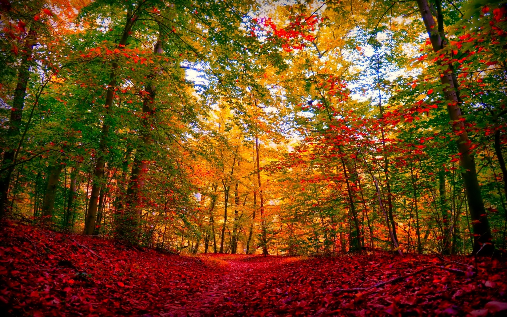 1680x1050 Autumn Forest Amp Red Carpet Desktop Pc And Mac