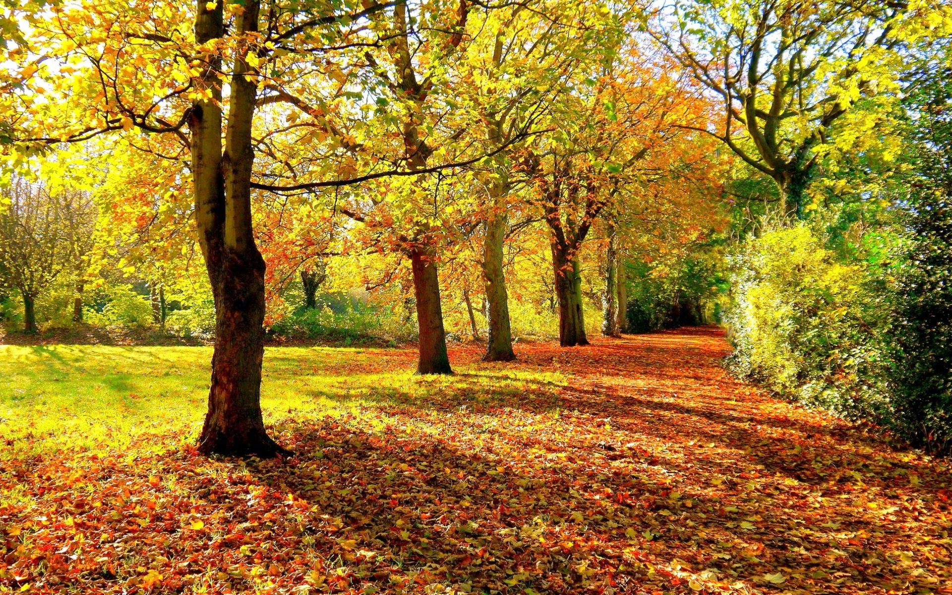 In the autumn forest wallpapers and images - wallpapers, pictures ...