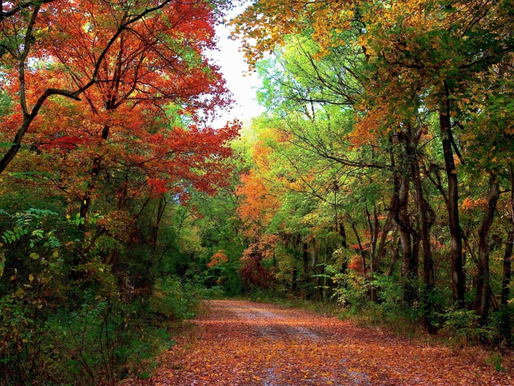 1024x768 Autumn Forest Path Amp Leaves Desktop Pc And Mac