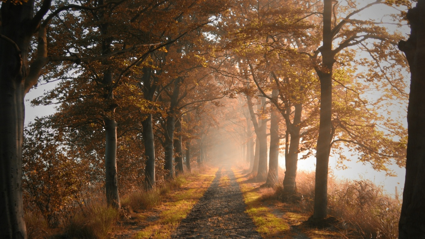 1366x768 Autumn Forest Road & Fog