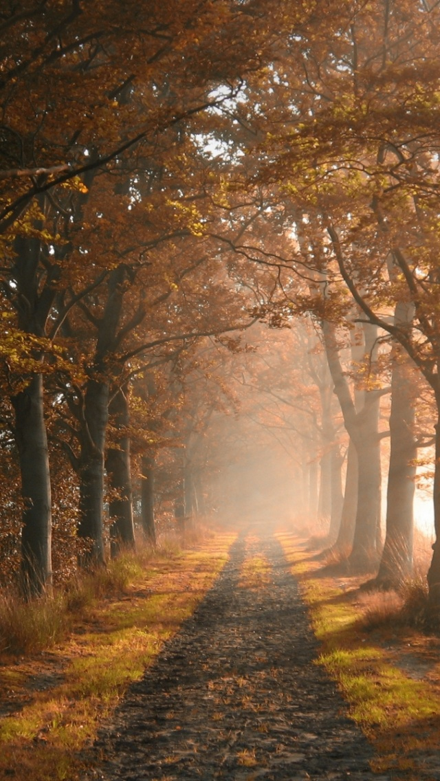 640x1136 Autumn Forest Road & Fog