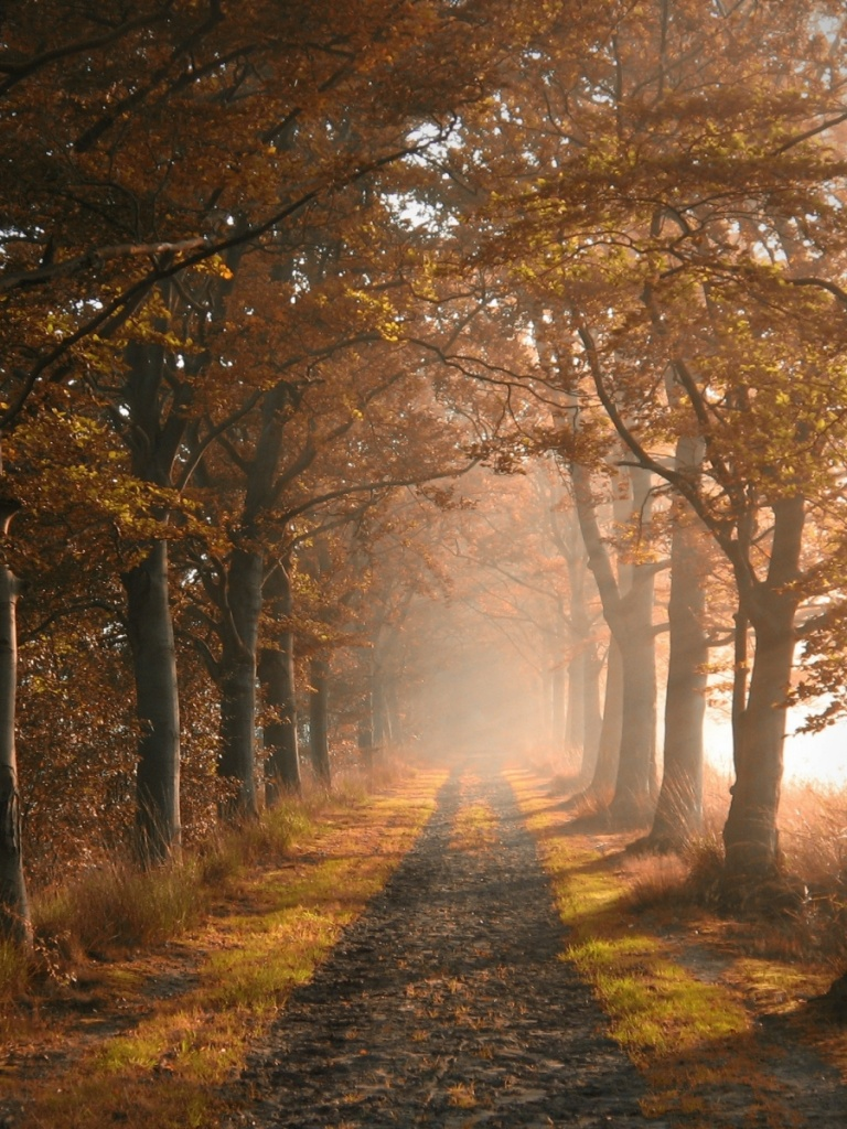 768x1024 Autumn Forest Road & Fog