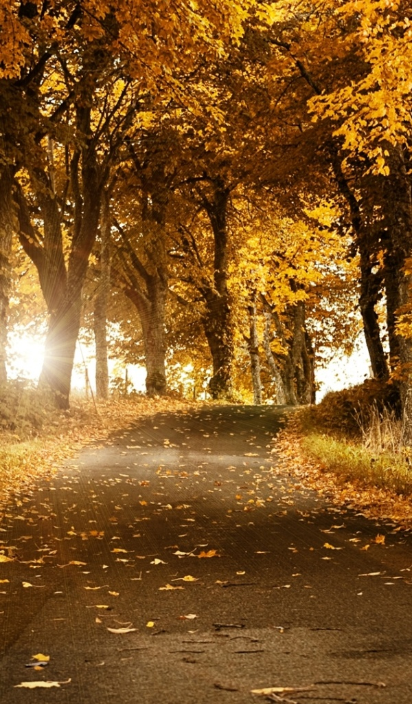 600x1024 Autumn Forest Road Leaves Galaxy Tab 2 Wallpaper