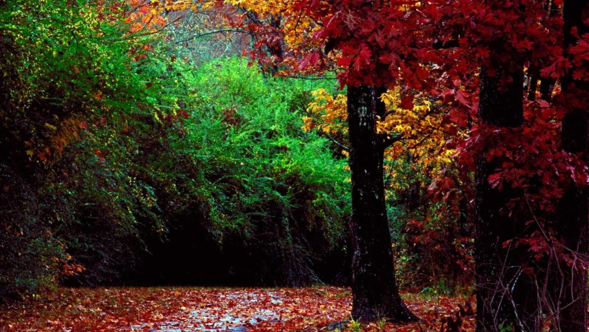 825x315 Autumn forest