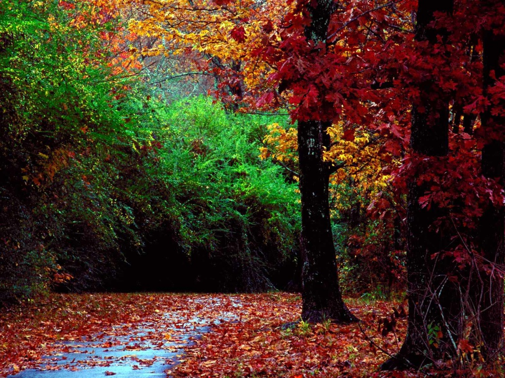 1024x768 Autumn forest desktop wallpapers and stock photos