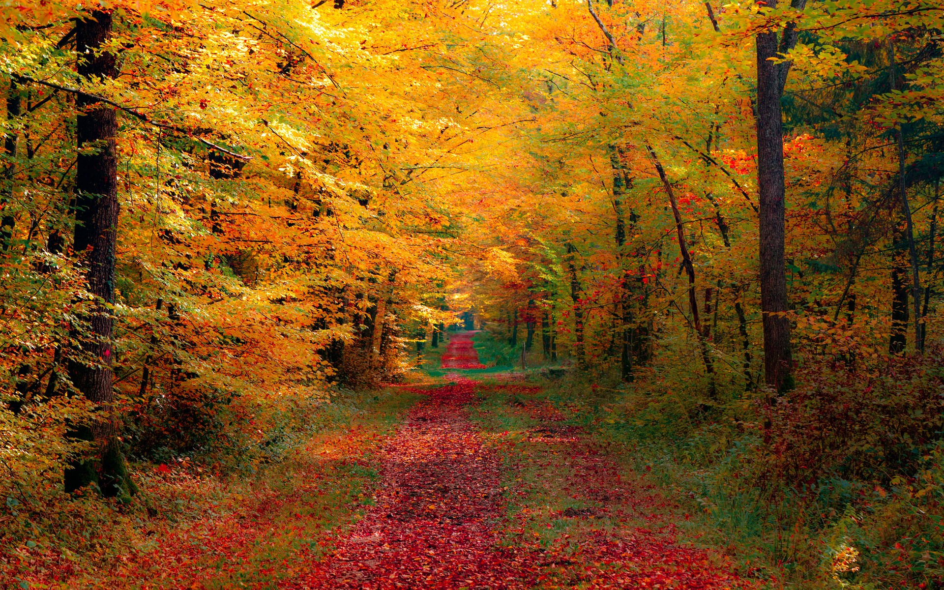 autumn forest wallpaper 690808