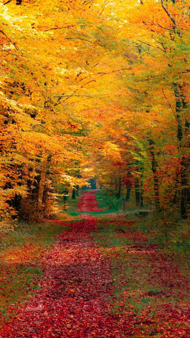 640x1136 autumn forest iphone 5 wallpaper