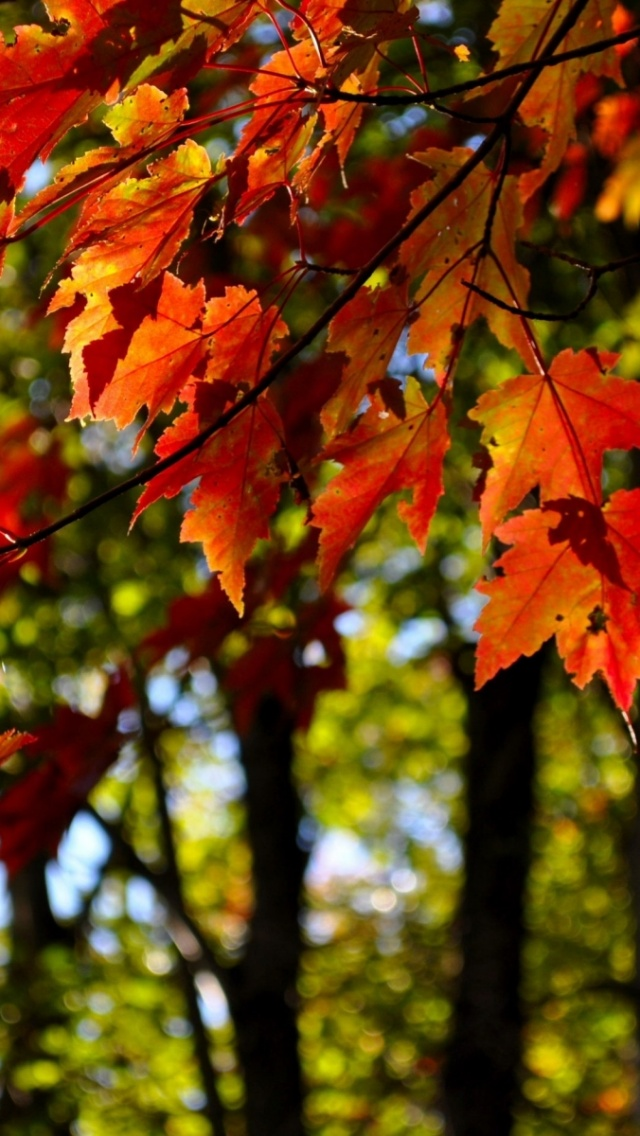 640x1136 Autumn Leaves Close Up View Iphone 5 Wallpaper