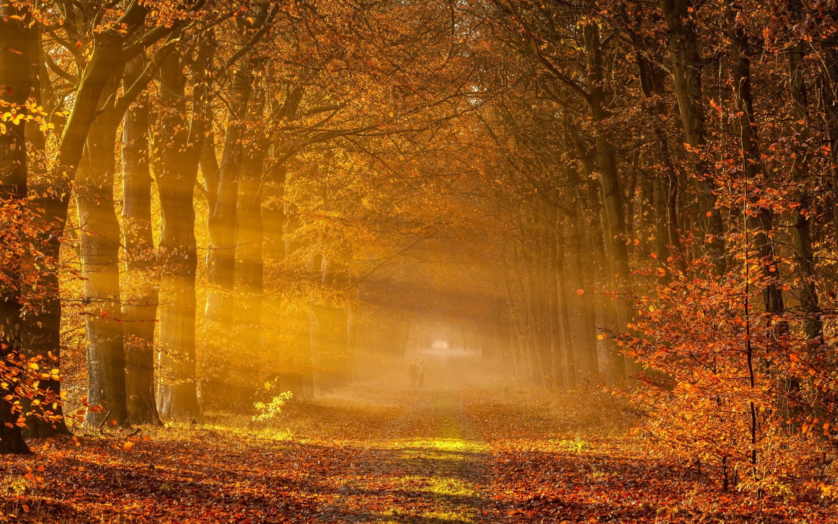 1680x1050 Autumn Road Sun Rays People