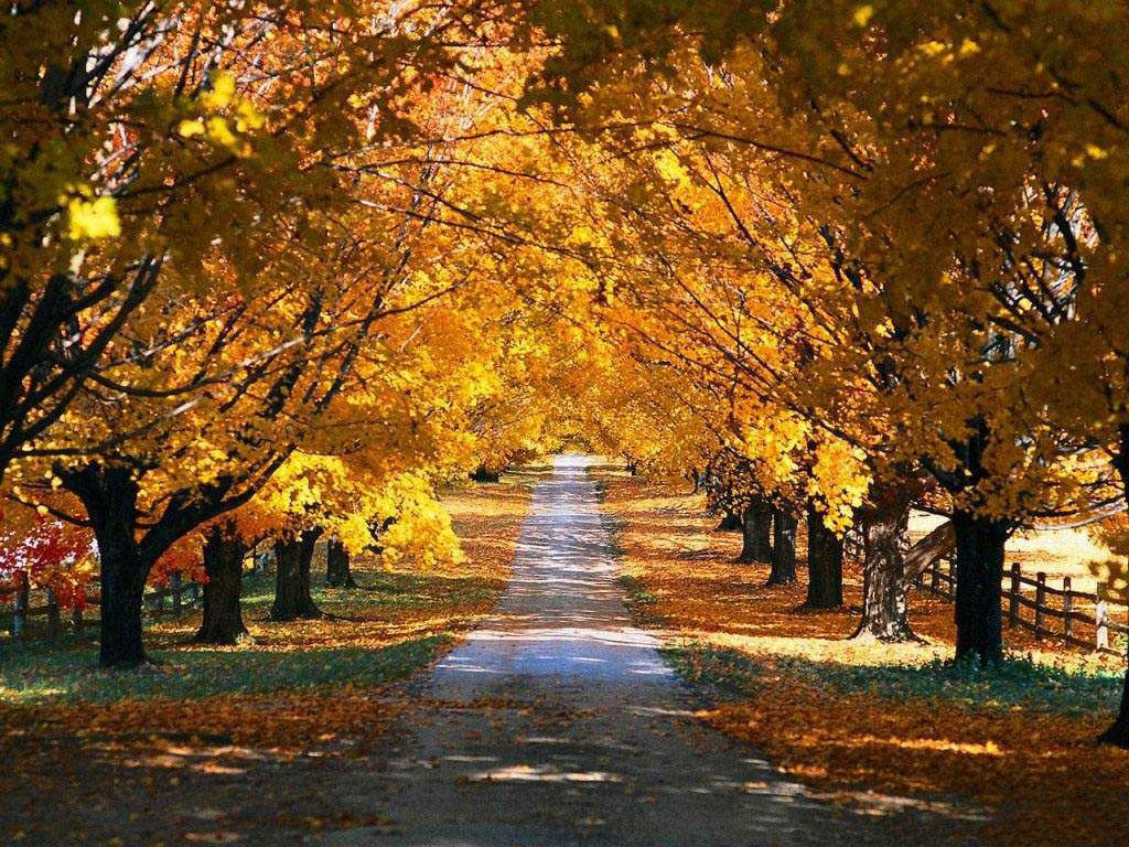 1024x768 Autumn road
