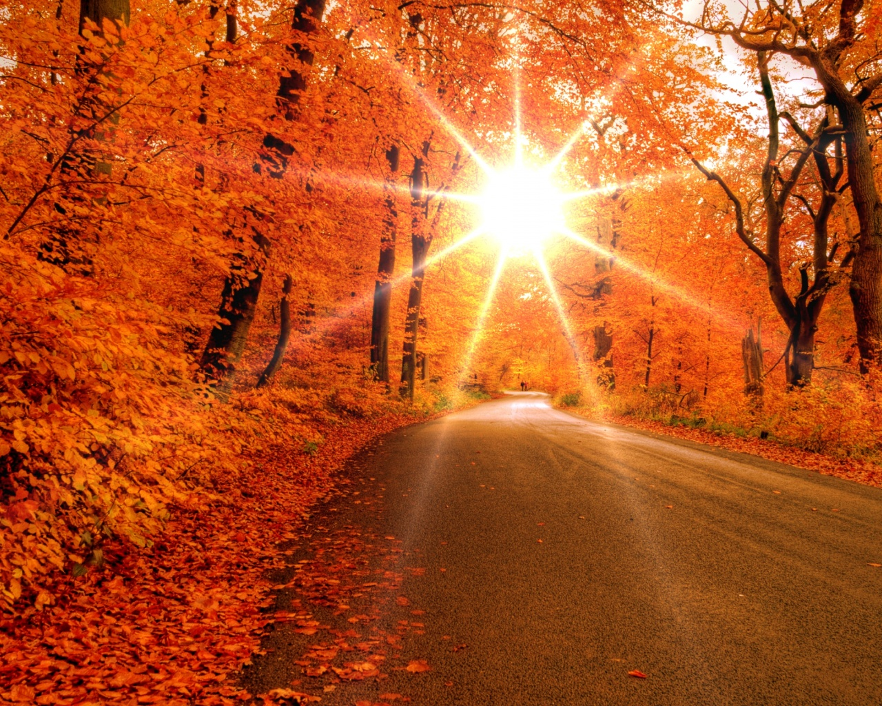Wide Autumn Road Wallpapers