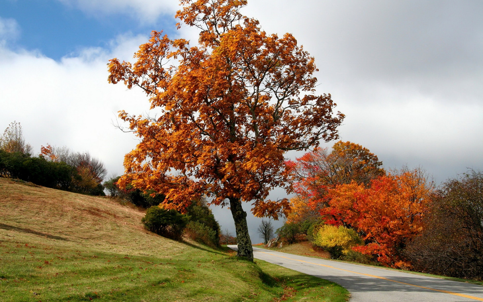 Autumn Trees Road Hills Bushes Wallpapers Autumn Trees