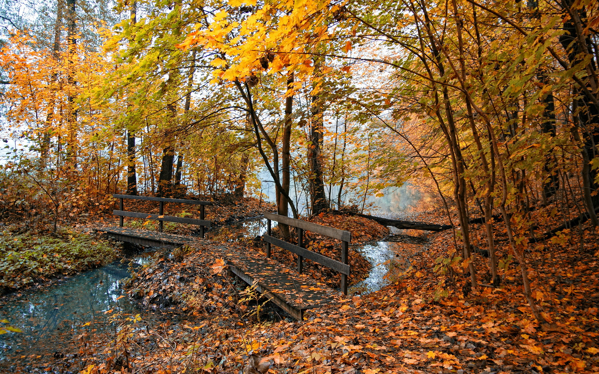 1920x1200 Autumn Forest &amp- Creek Painting desktop PC and Mac wallpaper