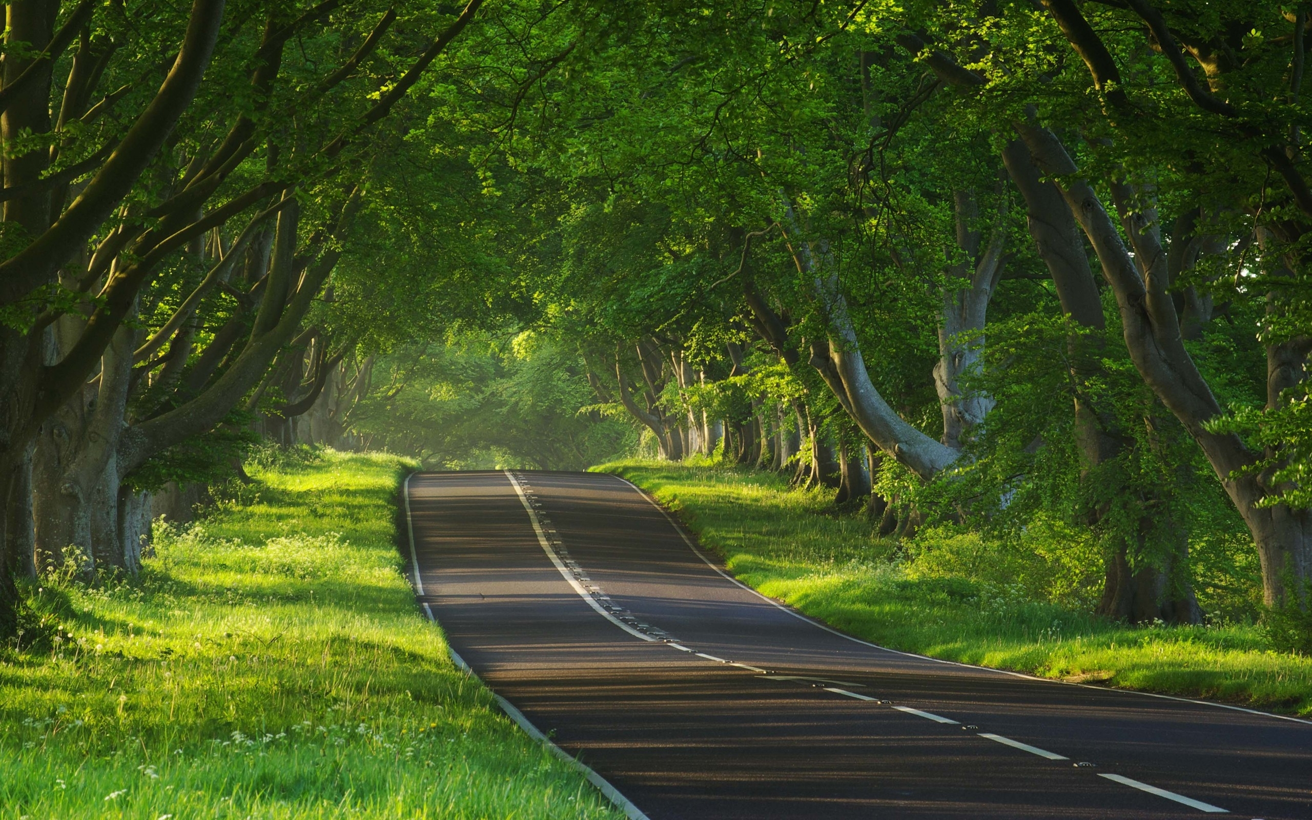 2560x1600 Awesome Trees Road Amp Grass Desktop Pc And Mac
