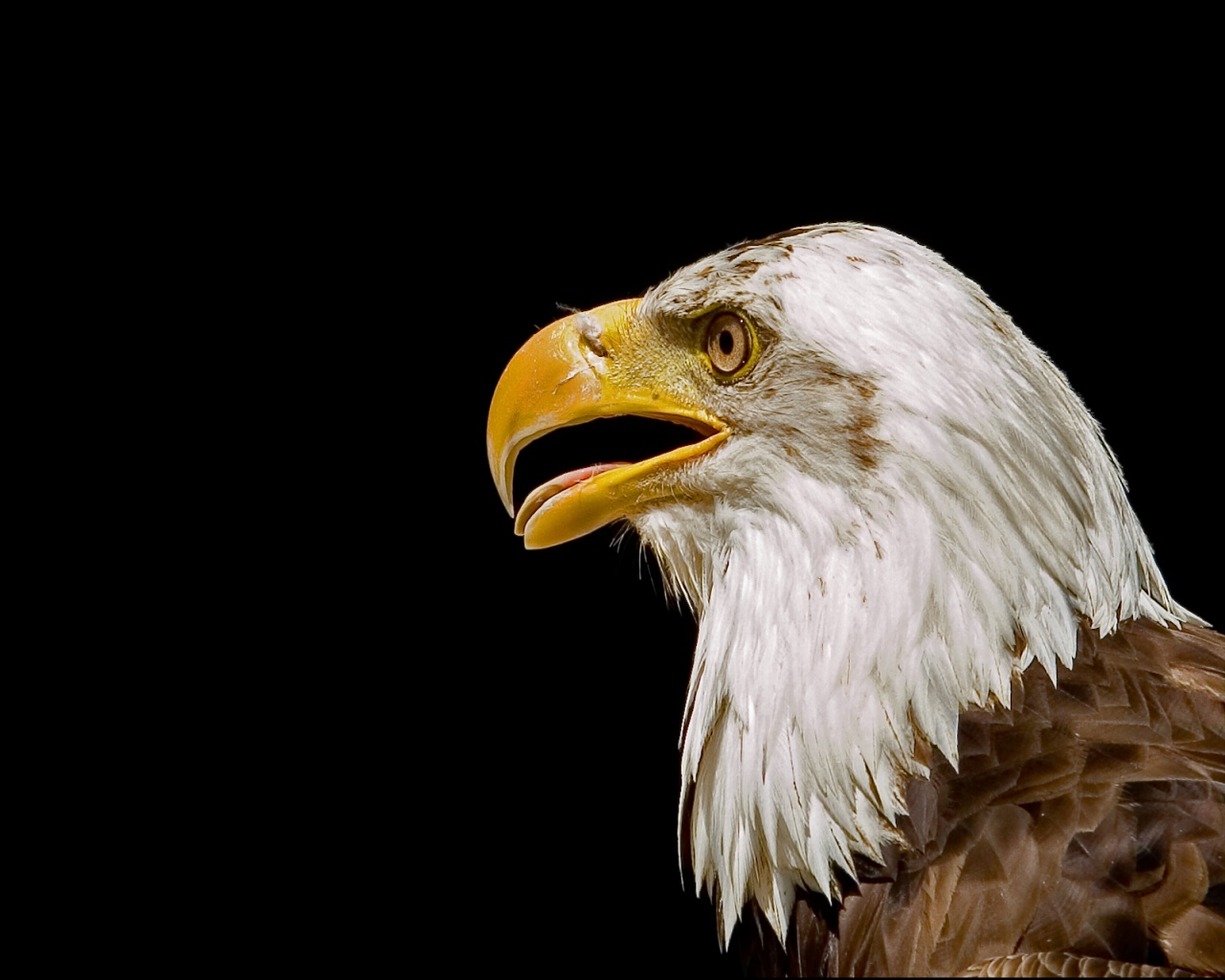 eagle 1280x1024 wallpaper - photo #2