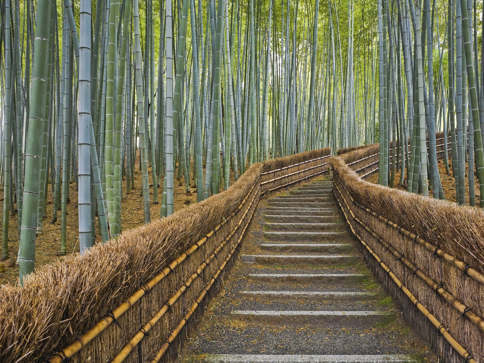 Bamboo Forest Wallpapers Bamboo Forest Stock Photos