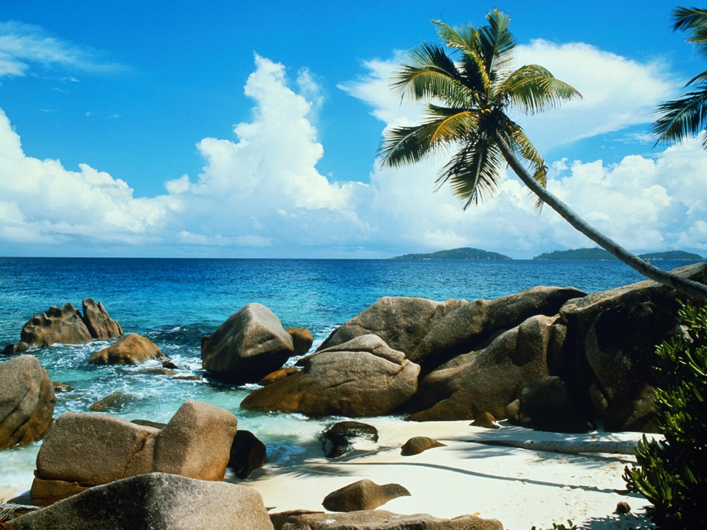10 Most Popular Beautiful Beach Backgrounds Palm Trees: Beach Palm Tree Stock Photos