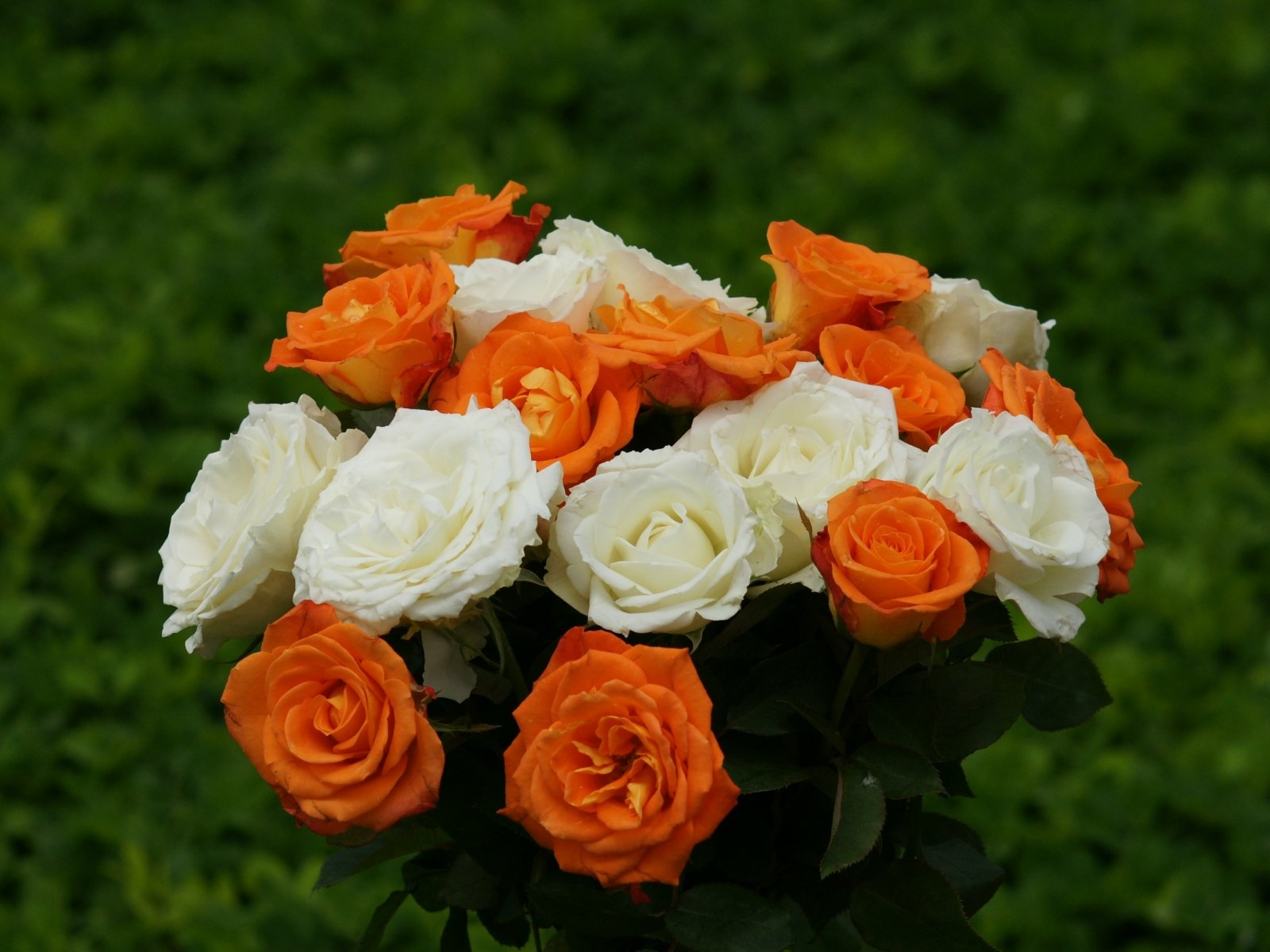 1500x500 Beautiful,  roses