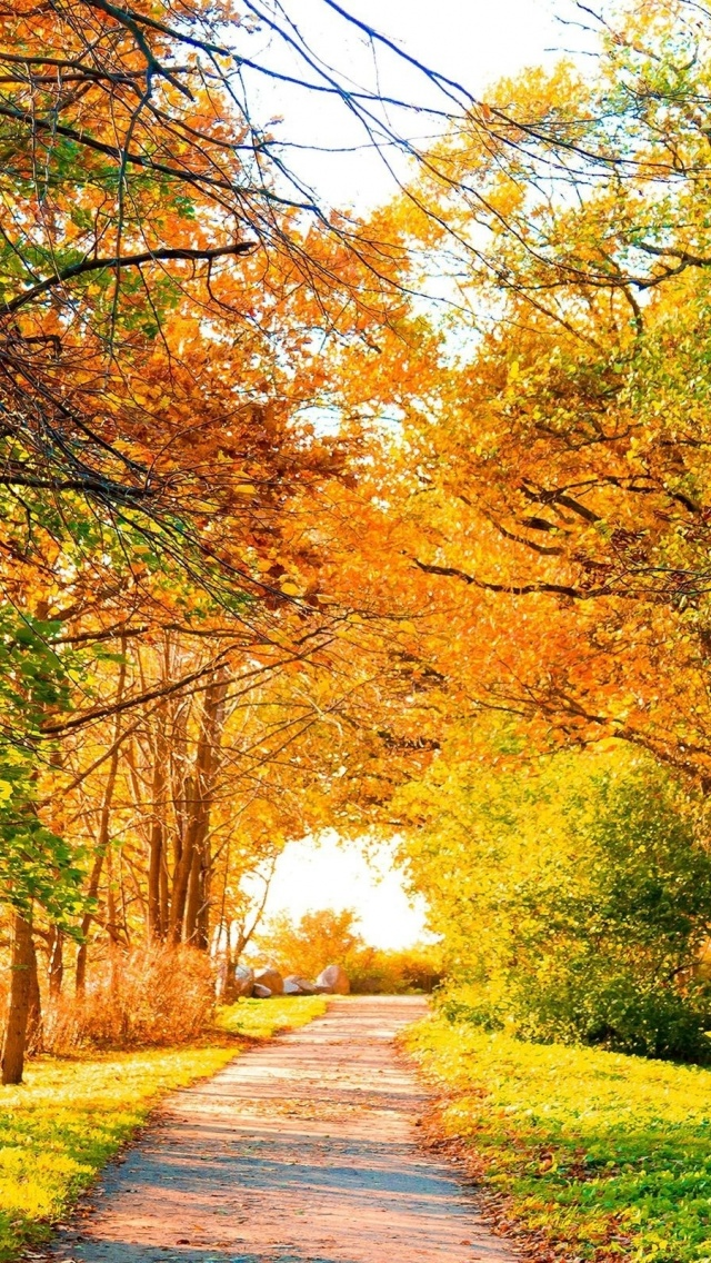 640x1136 Beautiful Autumn Trees Path Iphone 5 Wallpaper