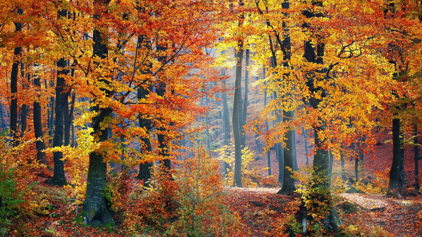 fall woods backgrounds wallpapers - photo #8
