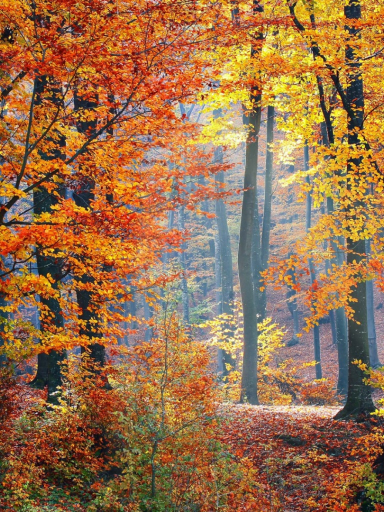 fall woods backgrounds wallpapers - photo #6