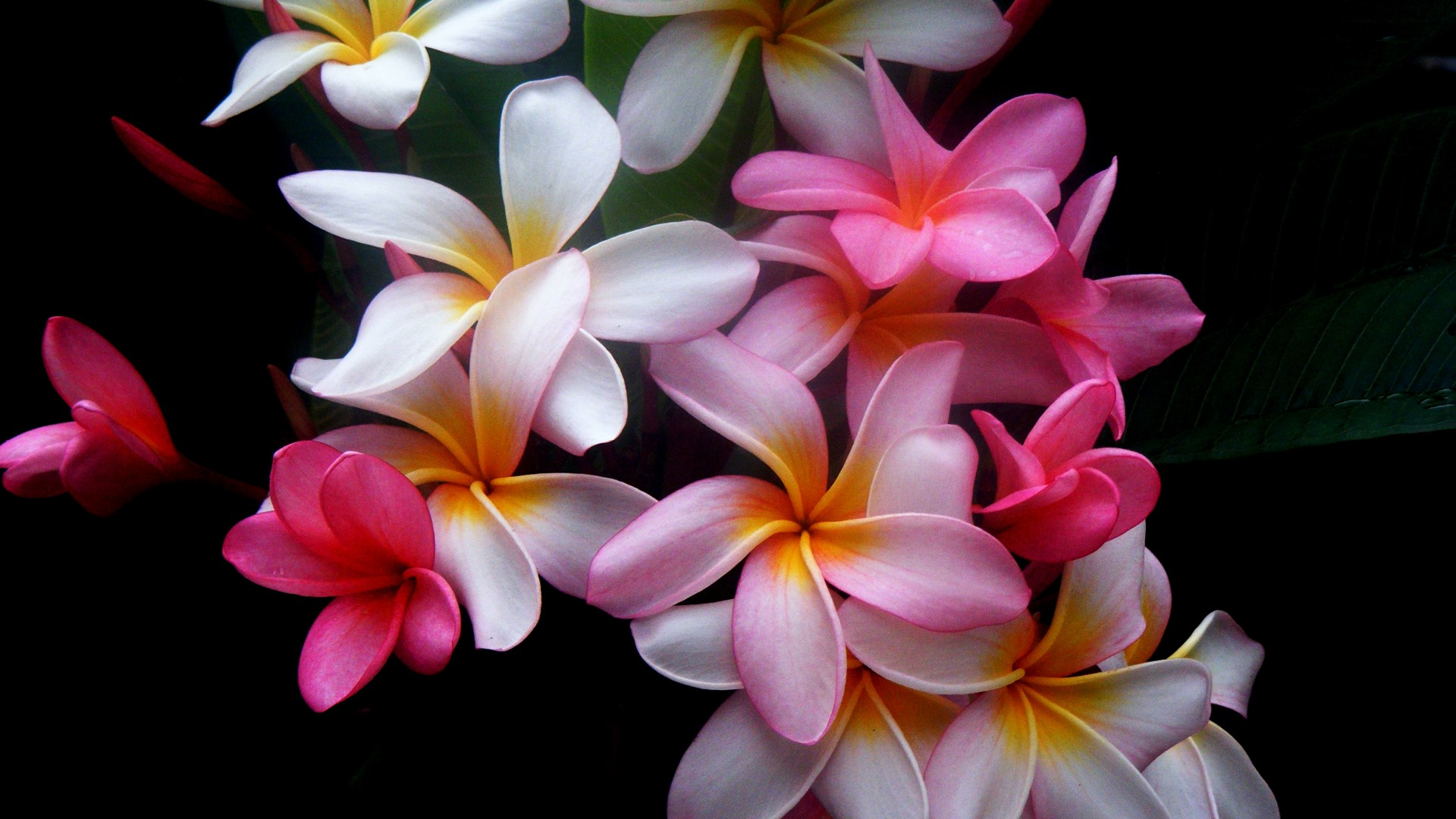 1920x1080 beautiful flowers desktop pc and mac wallpaper