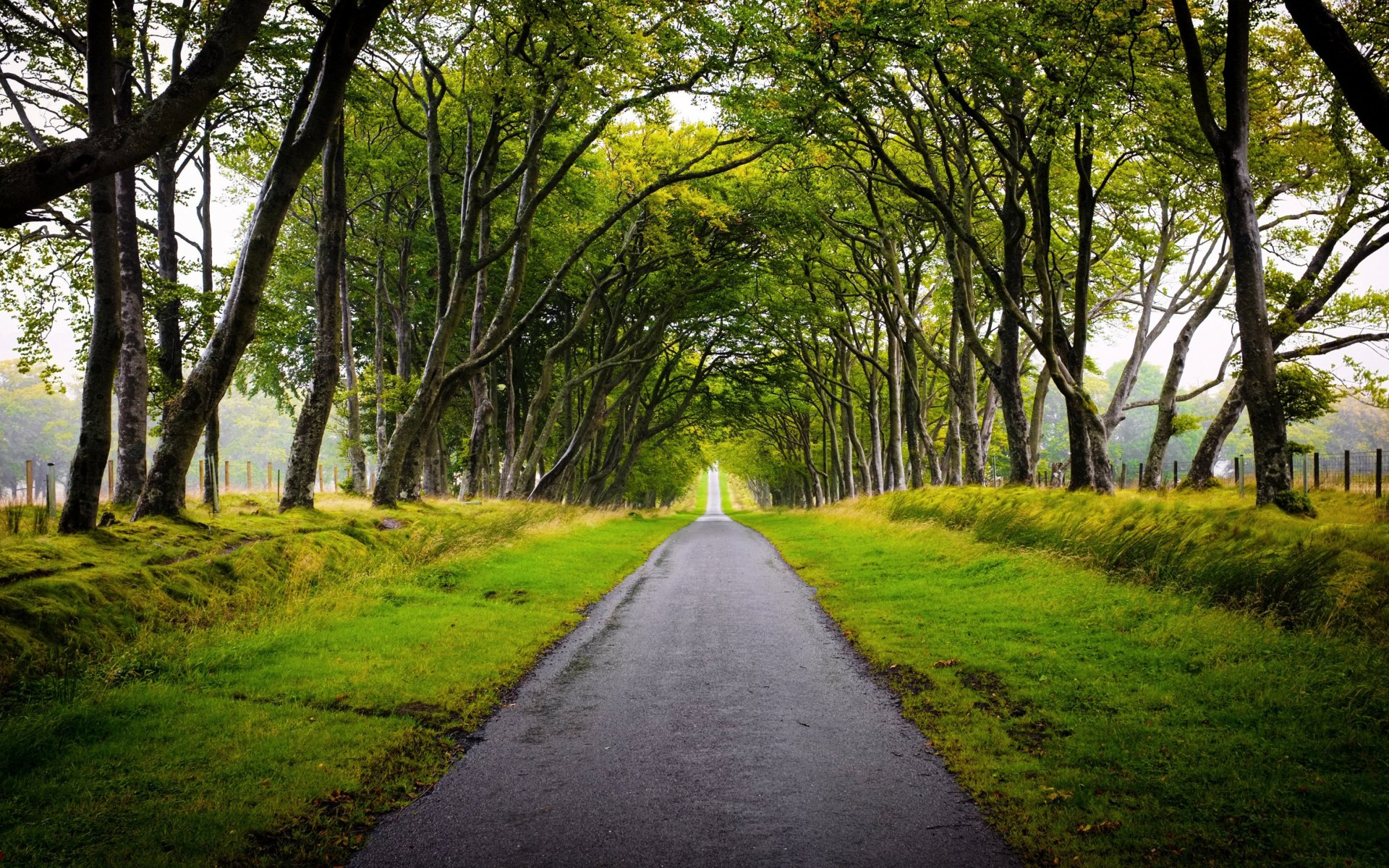 Beautiful Trees Alley Way Gras wallpapers | Beautiful ...