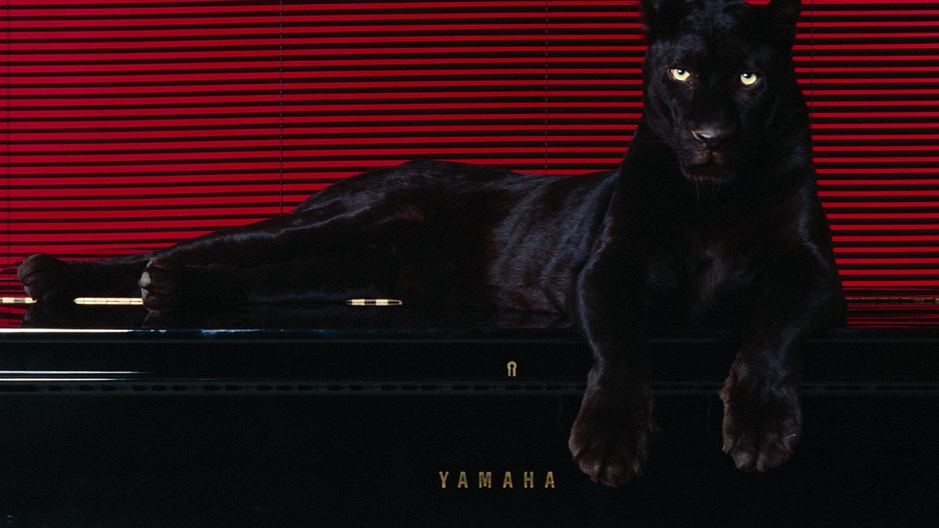 1366x768 Big cat on piano