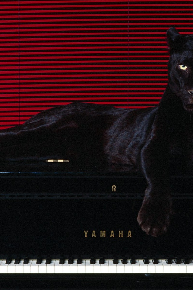 640x960 Big Cat On Piano Iphone 4 Wallpaper
