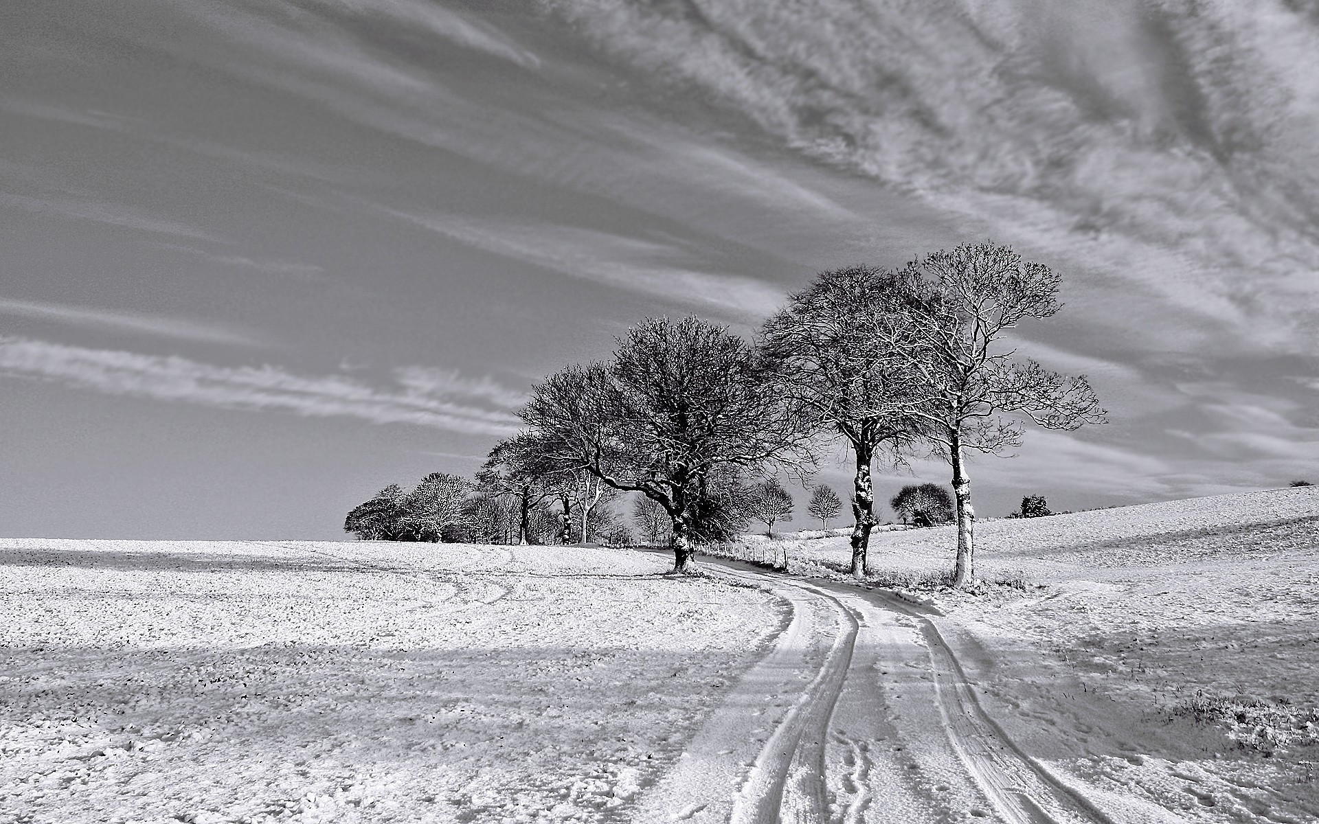 Winter Black And White wallpaper - 734962